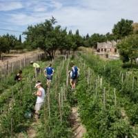 , La France démontre que la permaculture est très rentable, Made in Marseille