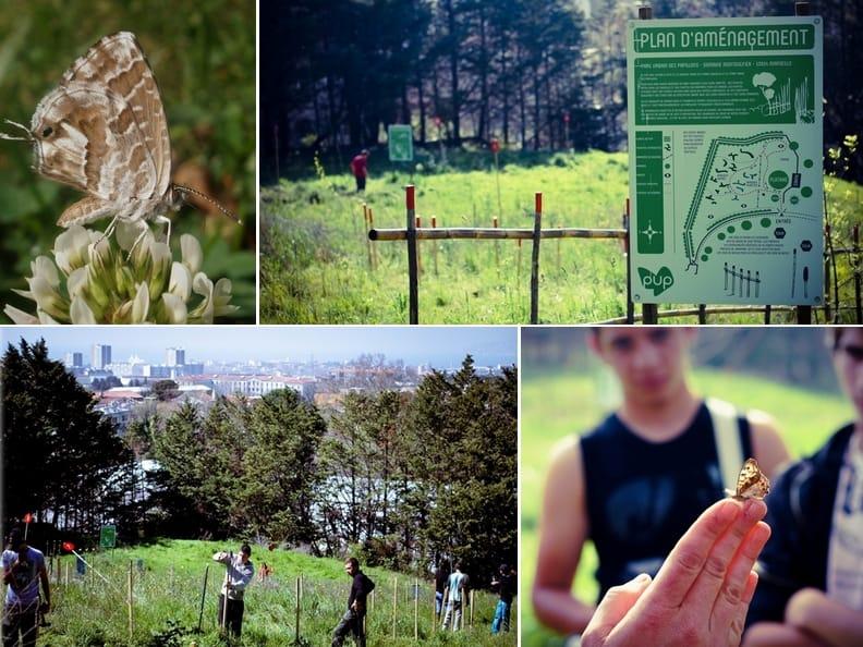 , Le Parc Urbain des Papillons continuera à accueillir du public jusqu'en 2025, Made in Marseille