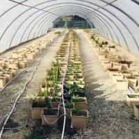 , Une Cité dédiée à l'agriculture urbaine va ouvrir ses portes à Marseille, Made in Marseille