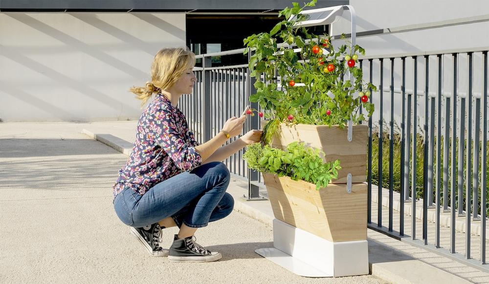 , Agrove, l'application pour vous aider à cultiver votre potager en ville, Made in Marseille